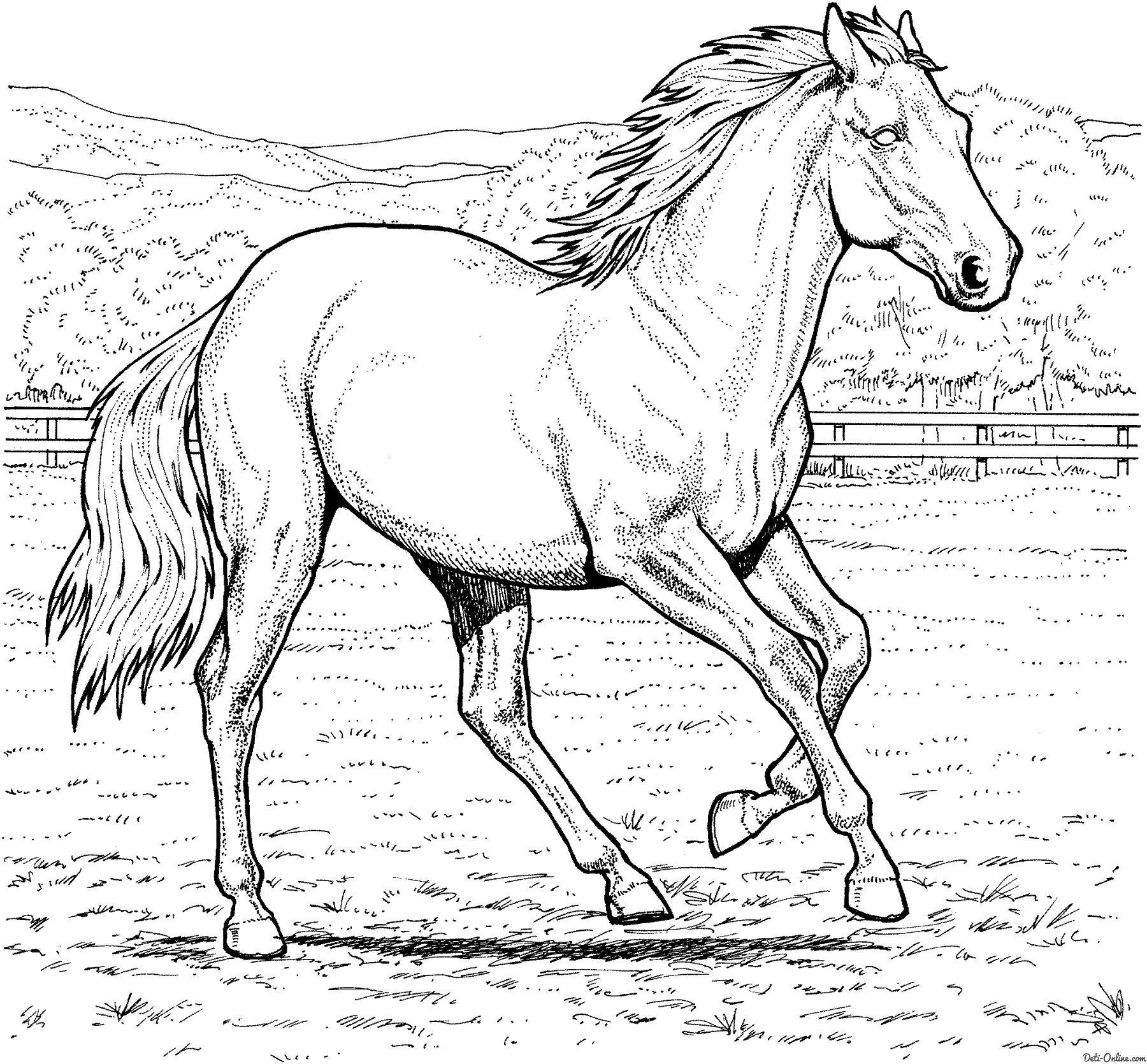 ферме раскраски лошади на