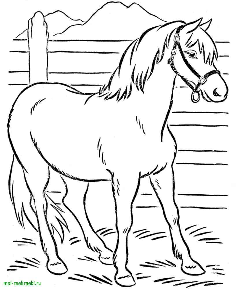 Лошадь пасется на ферме.