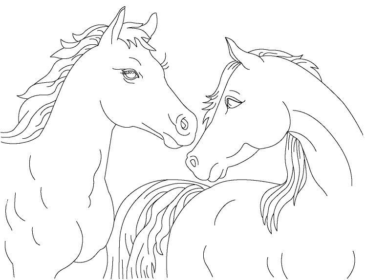 Пара лошадей Раскраски для мальчиков