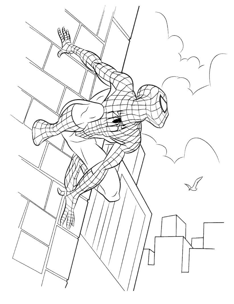 Человек паук прилип к стене Раскрашивать раскраски для мальчиков