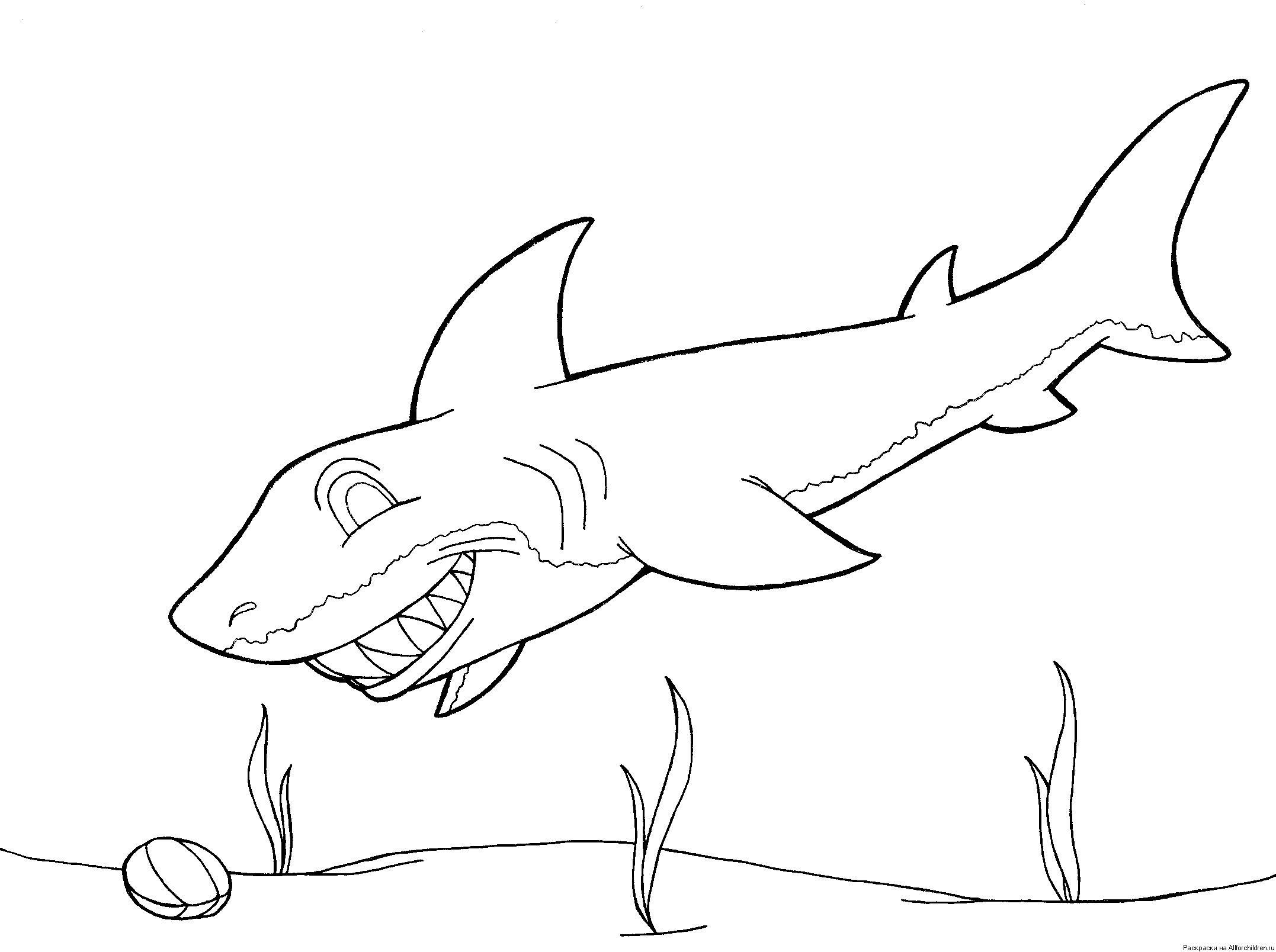 Зубастая акула Раскраски для мальчиков бесплатно