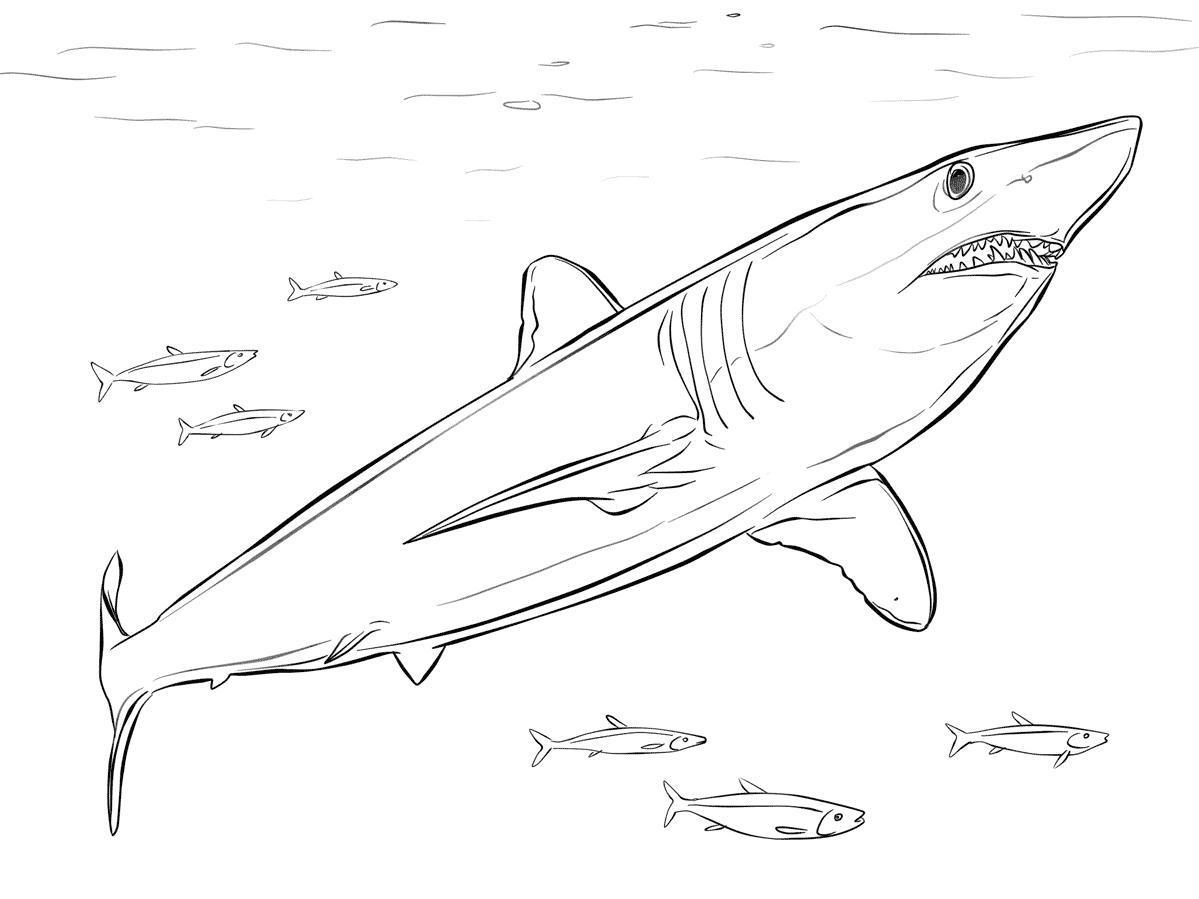 Акула в море с рыбами Раскраски для мальчиков бесплатно