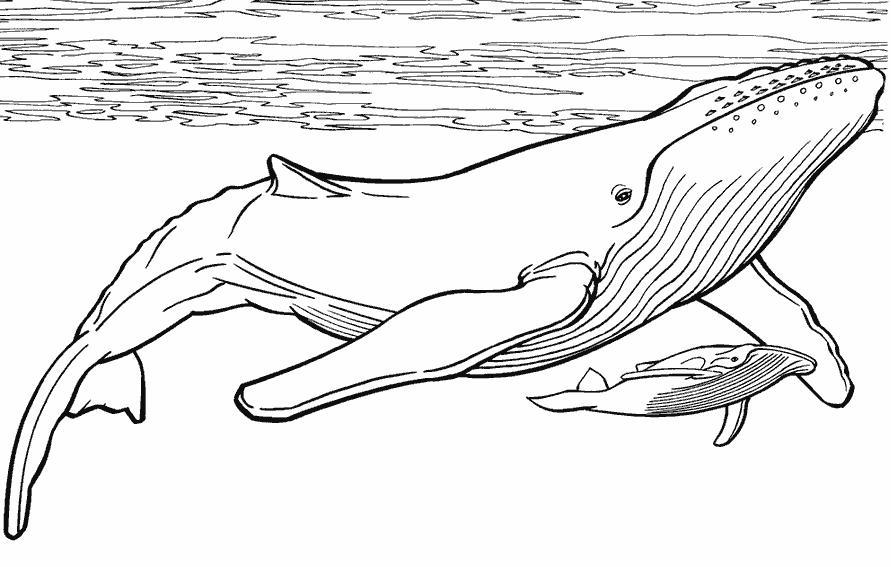 Полосатая акула Раскраски для мальчиков бесплатно
