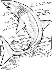 Красивая акула Раскраски для мальчиков бесплатно