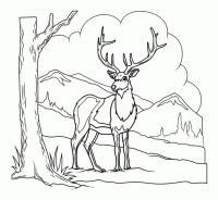 Олень среди гор Раскраски для детей мальчиков