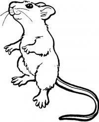 Мышь Скачать раскраски для мальчиков