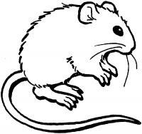 Мышка Скачать раскраски для мальчиков