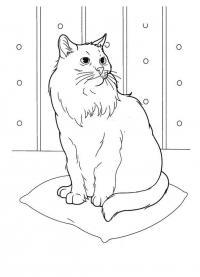 Кошка на подушке Скачать раскраски для мальчиков
