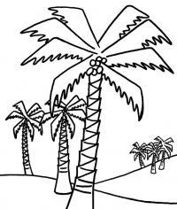 Пальмы Раскраски для мальчиков бесплатно