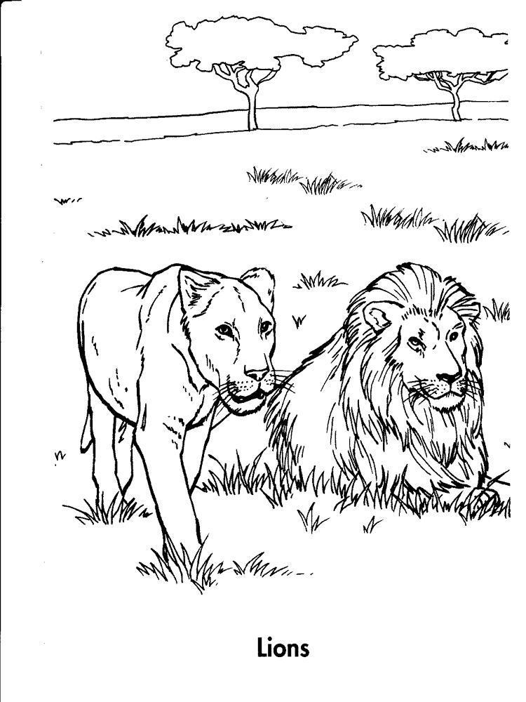 Охота львицы Раскраски для мальчиков