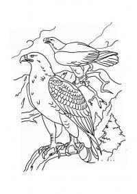 Птицы Распечатать раскраски для мальчиков