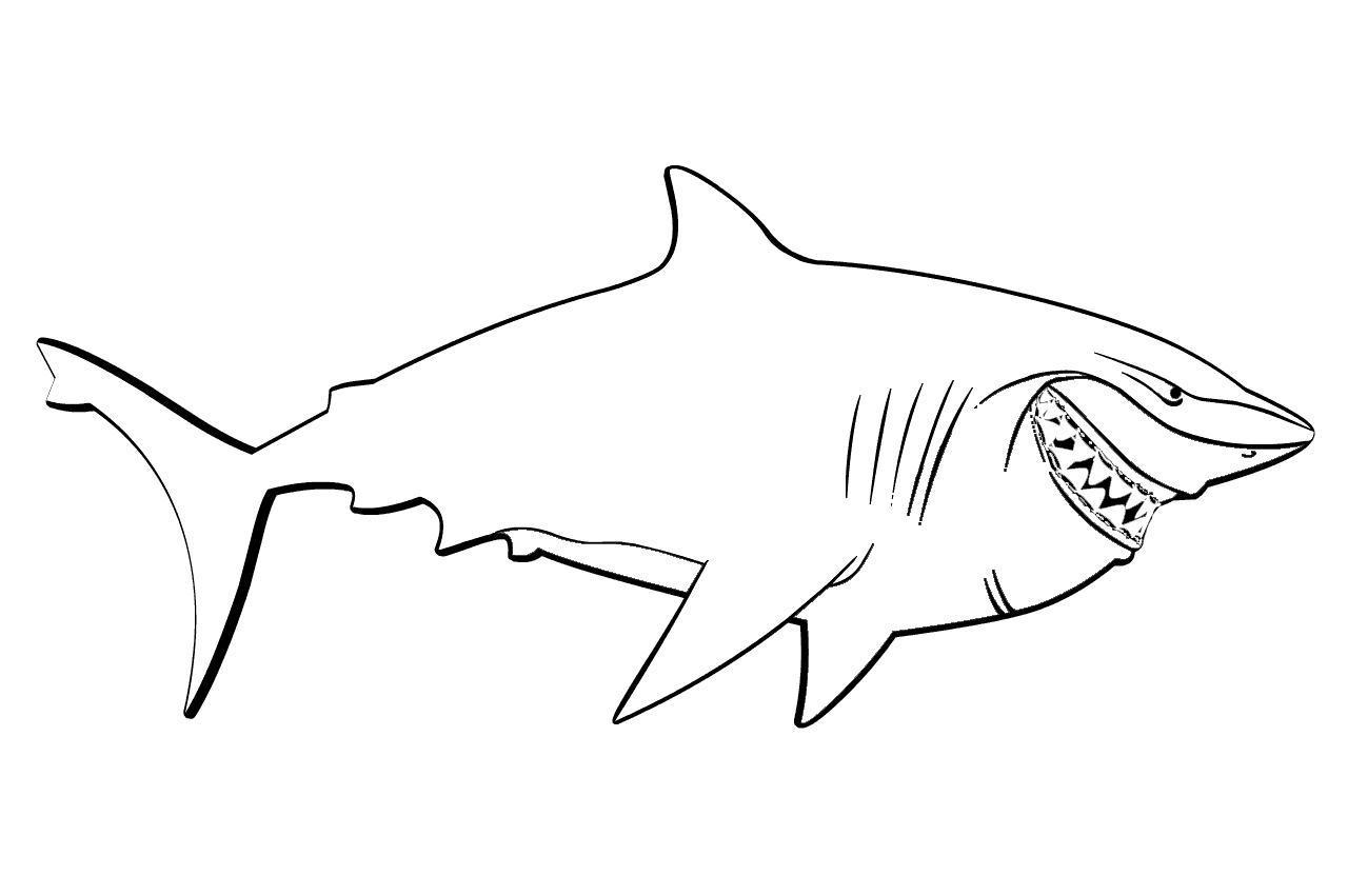 Картинки раскрашенной акулы