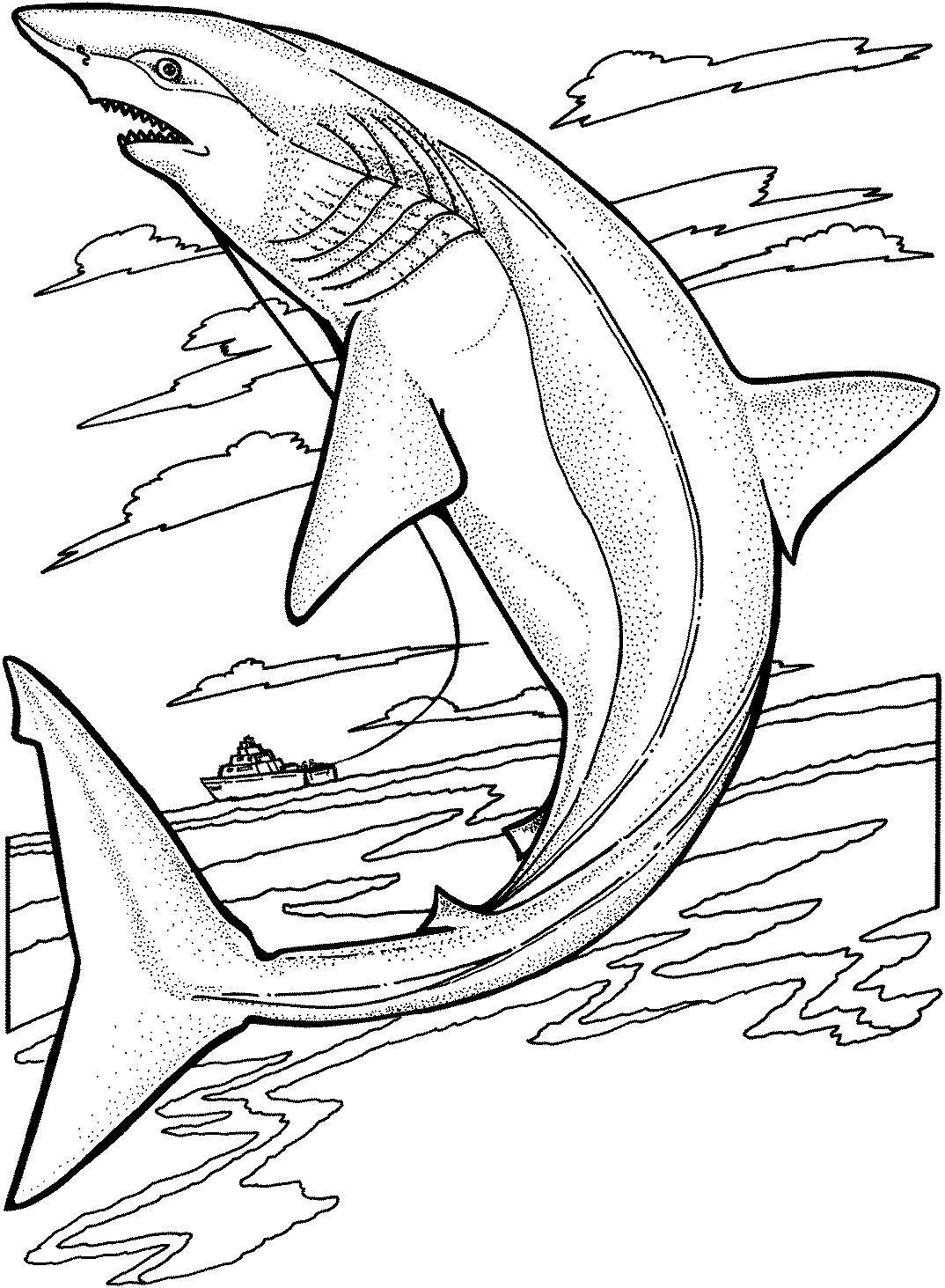 Красивая акула Раскраски для детей мальчиков