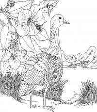 Птица в горах Распечатать раскраски для мальчиков