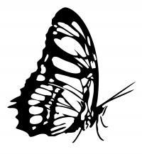 Бабочка Раскраски для мальчиков