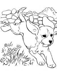 Забавный щенок Скачать раскраски для мальчиков
