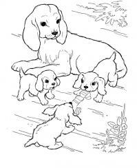Собака со щенками Скачать раскраски для мальчиков