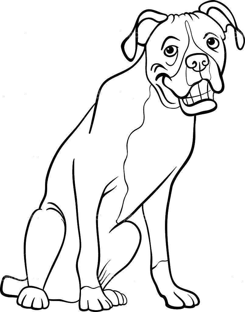 Боксер пес с улыбкой во все зубы Скачать раскраски для мальчиков